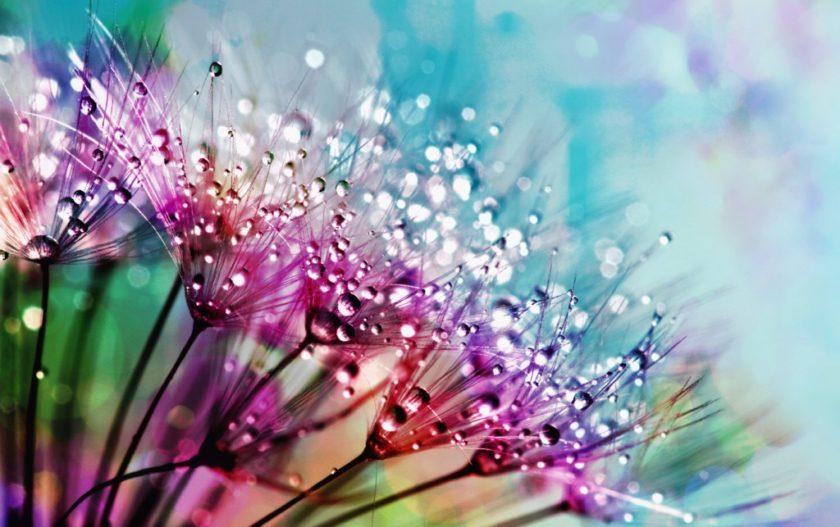 みずみずしい花々